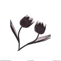 Tulip Dance Fine-Art Print