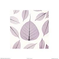 Leaf X-ray Fine-Art Print