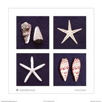 Seashells Study Fine-Art Print