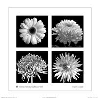 Flora Photographica No. 1 Fine-Art Print