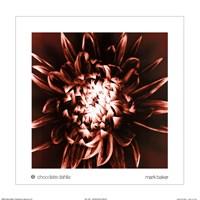 Chocolate Dahlia Fine-Art Print