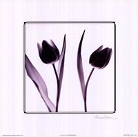 Tulip Impressions IV Fine-Art Print