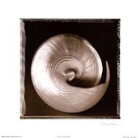 Shell-Egance I Fine-Art Print