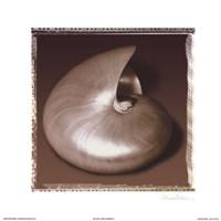 Shell-Egance II Fine-Art Print