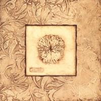 Rose Coral Fine-Art Print
