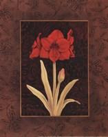 Damask Amaryllis - petite Fine-Art Print