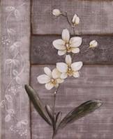 Orchid Shimmer I - Mini Fine-Art Print