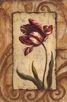 Classic Tulip II Fine-Art Print