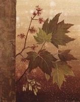 Maple Leaves Fine-Art Print