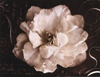 Garden Journal II Fine-Art Print