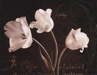 Garden Love Letter II Fine-Art Print