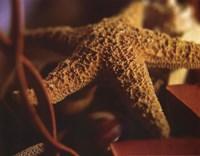 Starfish IV Fine-Art Print