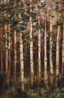 Aspen Beauty III Fine-Art Print