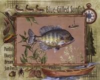Blue-Gilled Sunfish Fine-Art Print