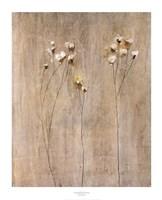 Vanilla Bloom I Fine-Art Print