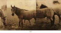 Extension of a Horse Fine-Art Print