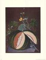 White Seeded Rock Melon Fine-Art Print