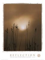 Reflection-Beach Grass Fine-Art Print