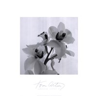 Orchid Spray II Fine-Art Print