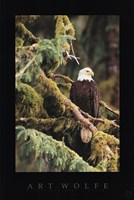 Silent Sentinel, Alaska Fine-Art Print