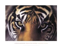 Eyes of the Goddess: Sumatran Tigress Fine-Art Print