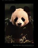 Giant Panda Feeding on Bamboo Fine-Art Print