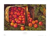 Country Apples Fine-Art Print
