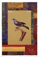 Blue Green Tanager Fine-Art Print