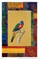 Australian Parrot Fine-Art Print