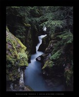 Avalanche Creek Fine-Art Print