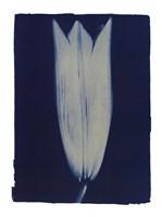 Closed Lilly2 Fine-Art Print