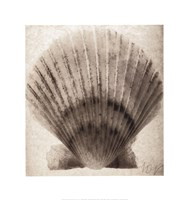 Scallop Shell Fine-Art Print
