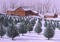 Xmas Tree Farm Fine-Art Print