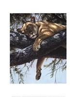 Lake Manyara Lioness Fine-Art Print