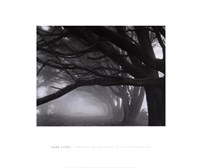 Cypresses, Skyline Drive, South San Francisco, 1996 Fine-Art Print