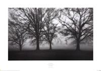 Fog Tree Study IV Fine-Art Print