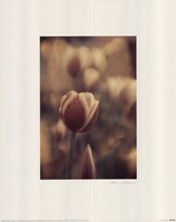Tinted Tulips II Framed Print