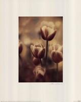 Tinted Tulips III Fine-Art Print