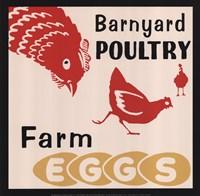 Barnyard Poultry-Farm Eggs Fine-Art Print