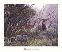 Lone Star Whitetail Fine-Art Print