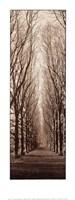 Poplar Trees Fine-Art Print