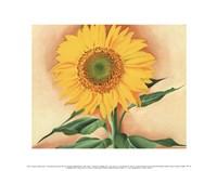 A Sunflower from Maggie, 1937 Fine-Art Print