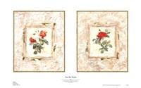 Rose Bud Medley Fine-Art Print