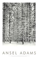 Pine Forest In The Snow, Yosemite Nation Fine-Art Print