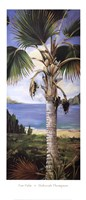 Fan Palm Fine-Art Print