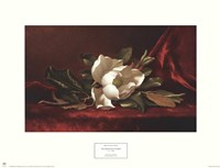 The Magnolia Flower Fine-Art Print