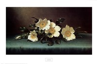 Four Cherokee Roses Fine-Art Print