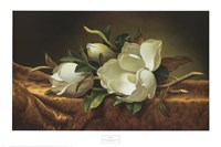 Magnolias on Gold Velvet Cloth Fine-Art Print