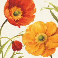 Poppies Melody II Fine-Art Print