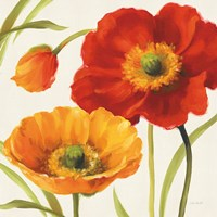Poppies Melody III Fine-Art Print